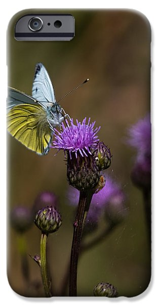 Peacefull iPhone Cases - White And Yellow Butterfly On Thistl iPhone Case by Leif Sohlman