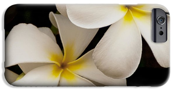 Flower Of Life iPhone Cases - White And Yellow Plumeria - Kauai Hawaii iPhone Case by Brian Harig