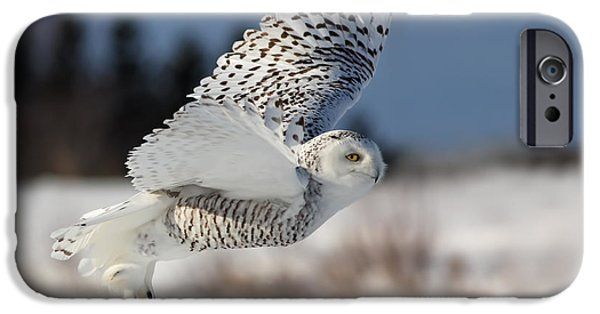Cold iPhone Cases - White angel - Snowy owl in flight iPhone Case by Mircea Costina Photography