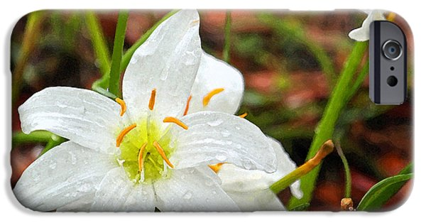 Rainy Day iPhone Cases - White Atamasco Lilies iPhone Case by Suzanne Gaff