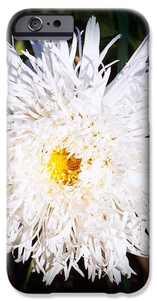 White Beauty iPhone Case by Omaste Witkowski