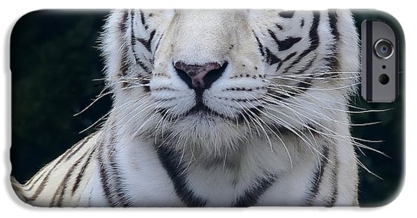 Eye Of The Tiger iPhone Cases - Blue Eyed White Bengal Tiger iPhone Case by Daniel Hagerman