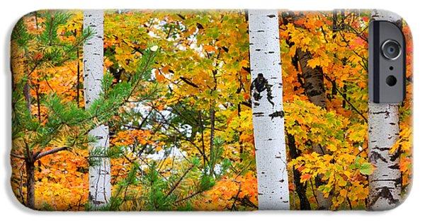 Pines iPhone Cases - White Birch Autumn iPhone Case by Craig Sterken