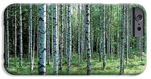 Forest Floor iPhone Cases - White Birches Aulanko National Park iPhone Case by Panoramic Images