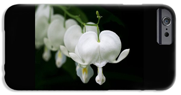 Black White iPhone Cases - White Bleeding Hearts iPhone Case by Rona Black