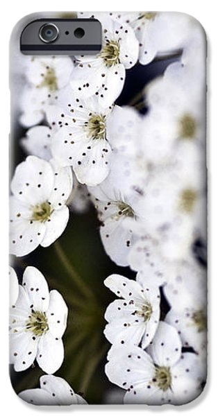Garden Images iPhone Cases - White Blossoms iPhone Case by Frank Tschakert