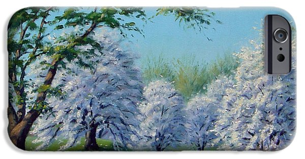 A Sunny Morning Paintings iPhone Cases - White Blossoms iPhone Case by Rick Hansen