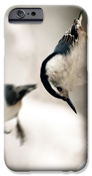 White Breasted Nuthatch In The Snow iPhone Case by Bob Orsillo