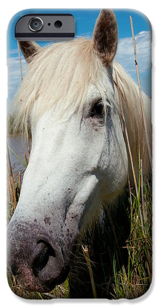The Horse iPhone Cases - White Camargue Horse With Head iPhone Case by Panoramic Images