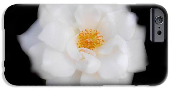 Camellia iPhone Cases - White Camellia Horizontal iPhone Case by Parker Cunningham