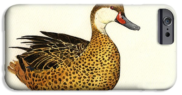 Ducks iPhone Cases - White cheeked pintail iPhone Case by Juan  Bosco