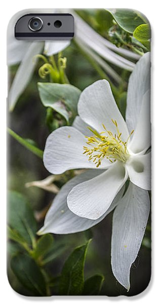White Columbine iPhone Case by Aaron Spong
