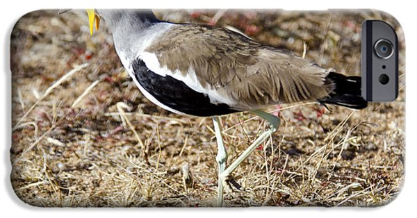 Lapwing iPhone Cases - White-crowned Lapwing iPhone Case by Pravine Chester