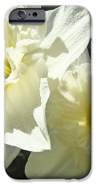 White Daffodils Flowers art prints Spring iPhone Case by Baslee Troutman