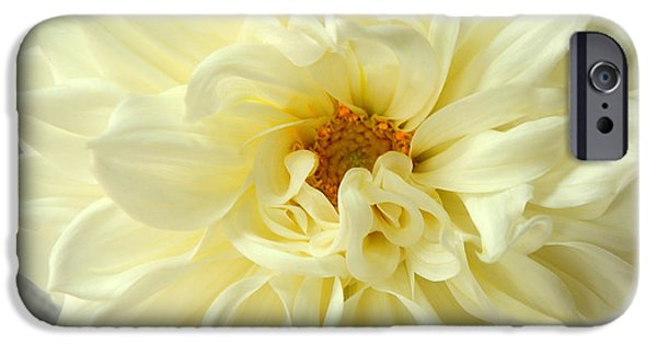 United States iPhone Cases - White Dahlia iPhone Case by Olivia Hardwicke