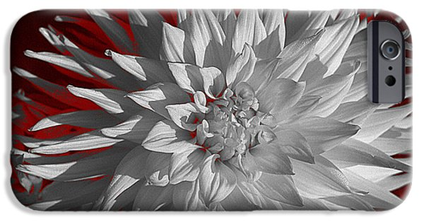 Flower Bombs iPhone Cases - White Dahlia iPhone Case by Richard Farrington