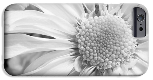 Nature Study iPhone Cases - White Daisy iPhone Case by Adam Romanowicz