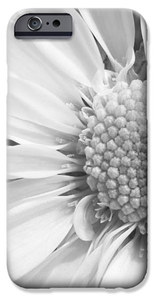 White Daisy iPhone Case by Adam Romanowicz