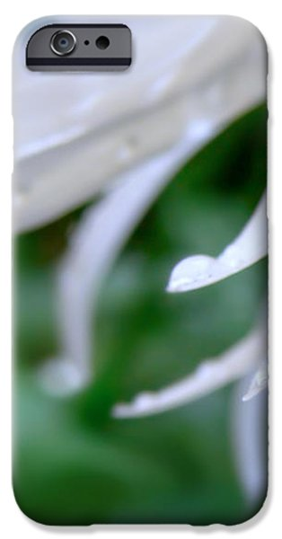 White Daisy Petals Raindrops iPhone Case by Jennie Marie Schell