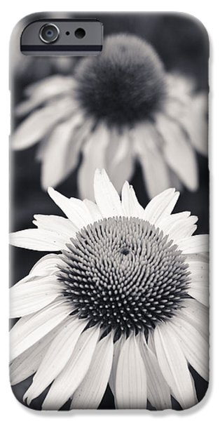 Nature Study iPhone Cases - White Echinacea Flower or Coneflower iPhone Case by Adam Romanowicz