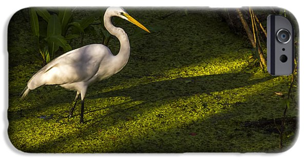 Hunting Bird iPhone Cases - White Egret iPhone Case by Marvin Spates