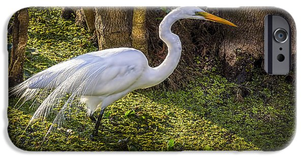 Swamp iPhone Cases - White Egret on the Hunt iPhone Case by Marvin Spates