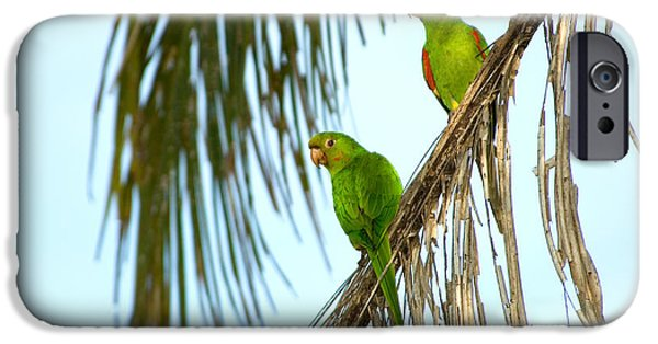Parakeet iPhone Cases - White-eyed Parakeets, Brazil iPhone Case by Gregory G. Dimijian, M.D.
