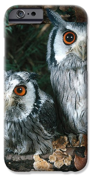 White Faced Scops Owl iPhone Case by Hans Reinhard