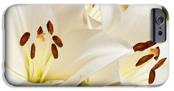 Blooming Pyrography iPhone Cases - White Flowers iPhone Case by Oscar Karlsson