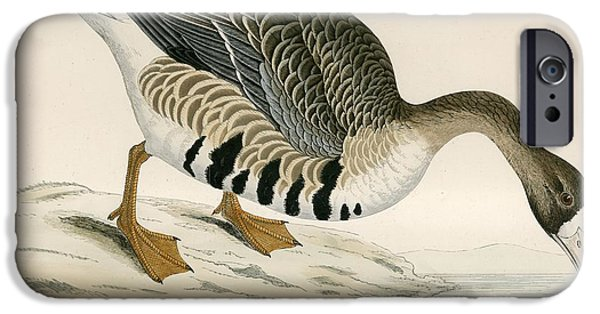 Hunting Bird iPhone Cases - White Fronted Goose iPhone Case by Beverley R. Morris