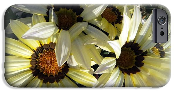Floral Photographs iPhone Cases - White gazania iPhone Case by Zina Stromberg