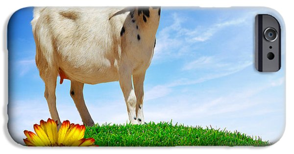 Agriculture iPhone Cases - White Goat iPhone Case by Carlos Caetano
