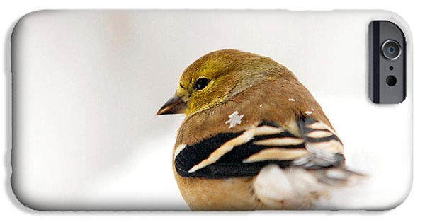 Snow Scene iPhone Cases - White Gold Goldfinch iPhone Case by Christina Rollo