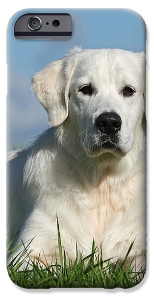 White Golden Retriever dog lying in grass iPhone Case by Dog Photos