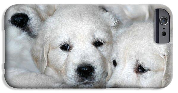 Dog Photos iPhone Cases - White Golden Retriever puppies iPhone Case by Dog Photos
