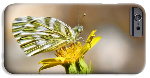 Plant iPhone Cases - White Green Veined Butterfly iPhone Case by Mariola Bitner
