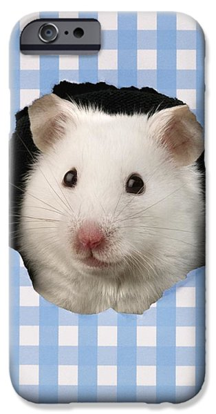 Animals Photographs iPhone Cases - White Hamster iPhone Case by Greg Cuddiford