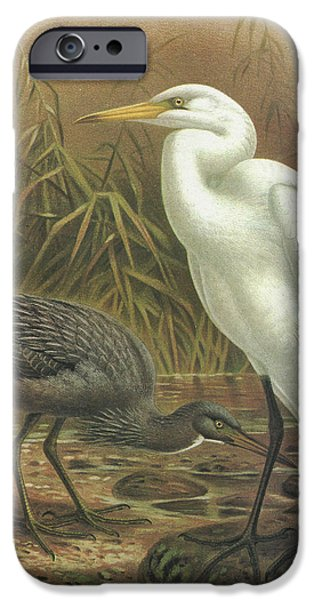 Heron Paintings iPhone Cases - White Heron and Reef Heron iPhone Case by J G Keulemans
