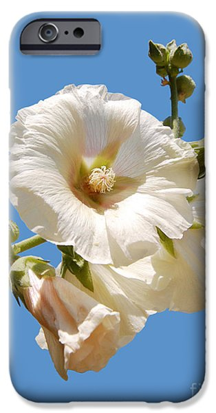 Althea iPhone Cases - White hollyhock isolated on blue iPhone Case by Susan Montgomery