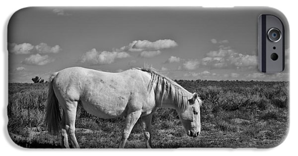 Dave iPhone Cases - White Horse in the High Desert BW iPhone Case by David Gordon