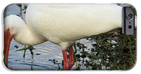 Ibis iPhone Cases - White Ibis iPhone Case by Adam Jewell