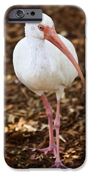 Nature Study iPhone Cases - White Ibis iPhone Case by Adam Romanowicz