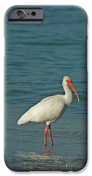 Ibis iPhone Cases - White Ibis iPhone Case by Cindi Ressler