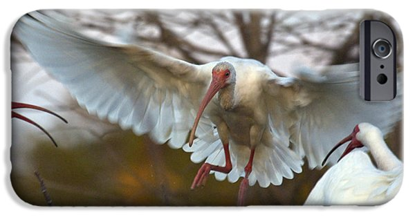 Ibis iPhone Cases - White Ibis iPhone Case by Mark Newman