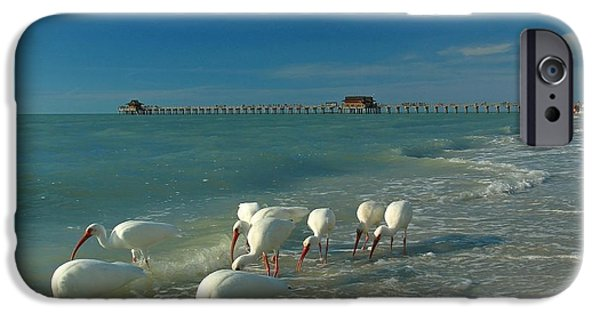 Ibis iPhone Cases - White Ibis near Historic Naples Pier iPhone Case by Juergen Roth