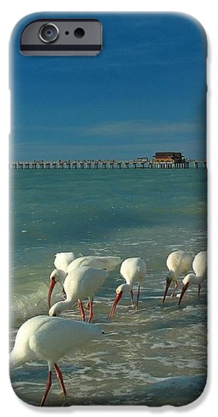 White Ibis near Historic Naples Pier iPhone Case by Juergen Roth