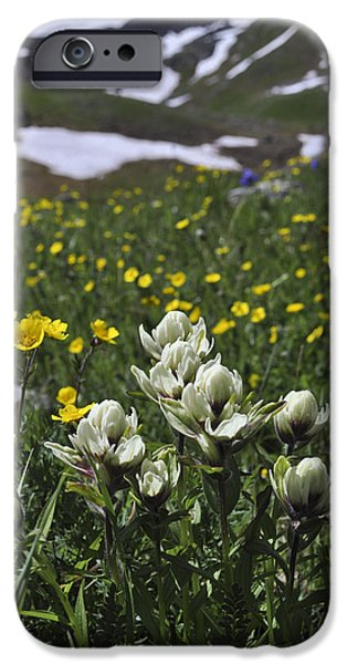 White Indian Paintbrushes iPhone Case by Aaron Spong