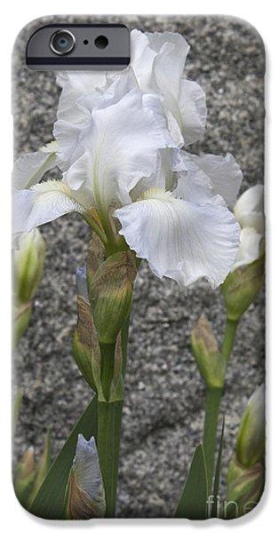 Yorktown iPhone Cases - White Iris in Yorktown iPhone Case by Teresa Mucha