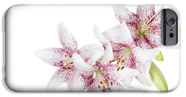 Isolated Pyrography iPhone Cases - White lillies iPhone Case by Olga Hague