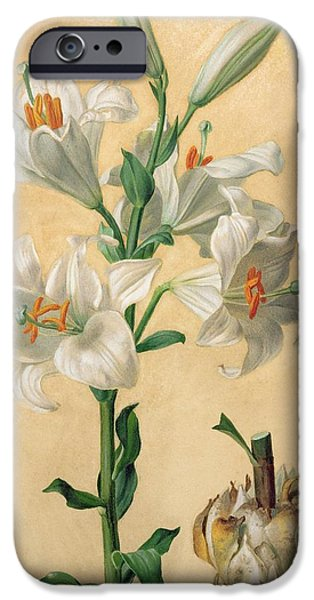 19th Century iPhone Cases - White Lily iPhone Case by Carl Franz Gruber